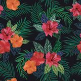 Floral seamless pattern. Background with isolated colorful hand. Drawn tropical flowers and leaves on black background. Design for invitation, prints and cards Royalty Free Stock Image
