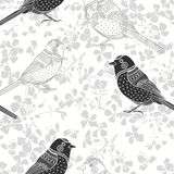 Floral seamless pattern with birds. Monochrome  background Royalty Free Stock Photography