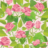 Floral seamless pattern with blooming pink roses Stock Photos