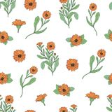 Floral seamless pattern with calendula plants and cut flower heads hand drawn in antique style on white background Stock Photo