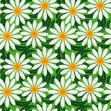 Floral seamless pattern with Chamomiles. Stock Images