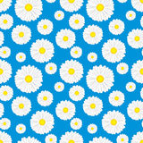 Floral seamless pattern with chamomiles on blue background. Stock Image