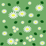 Floral seamless pattern with chamomiles, and green leaves on lig Stock Images