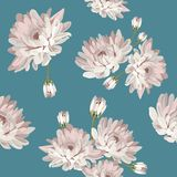 Floral seamless pattern with chrysanthemums. Floral seamless pattern. Chrysanthemums on blue background. Vector illustration Royalty Free Stock Images