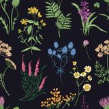 Floral seamless pattern with colorful forest herbs, herbaceous plants and blooming wild flowers on black background Stock Photography