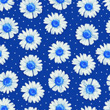 Floral seamless pattern with daisies Royalty Free Stock Photography