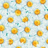 Floral seamless pattern with daisies Royalty Free Stock Photos