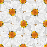 Floral seamless pattern - daisy Stock Photo