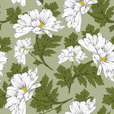 Floral seamless pattern - daisy Stock Photos