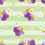 Floral seamless pattern. Pansies with chamomiles on striped background. Vector illustration Royalty Free Stock Photo