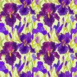 Floral seamless pattern. Flower iris background. Royalty Free Stock Image