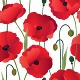 Floral seamless pattern. Flower poppy background. Stock Image