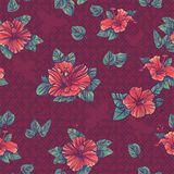 Floral seamless pattern with flowers hibiscus Stock Photo