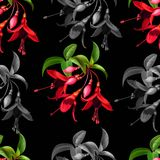 Floral seamless pattern with funchsia vector illustration royalty free stock images