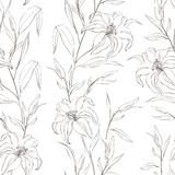 Floral seamless pattern with gentle lily flowers. Royalty Free Stock Image