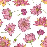 Floral seamless pattern with gorgeous pink blooming lotus hand drawn on white background. Backdrop with elegant flowers Stock Illustration