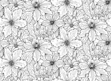 Floral seamless pattern on with hand drawn clematis flowers Royalty Free Stock Images