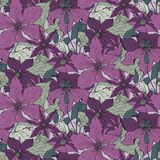 Floral seamless pattern on with hand drawn clematis flowers Stock Images