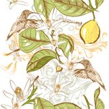 Floral seamless pattern with hand drawn lemon flowers and hummin Stock Images