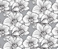 Floral seamless pattern with hand drawn orchid flowers Stock Images