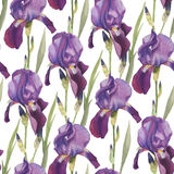 Floral seamless pattern with hand drawn watercolor violet iris. Background with bouquets of watercolor flowers Stock Photography