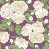 Floral seamless pattern with hand drawn white roses on violet background Stock Images