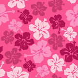 Floral seamless pattern of Hawaiian hibiscus. Floral seamless pattern of pink red Hawaiian hibiscus Stock Image
