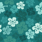 Floral seamless pattern of hibiscus Royalty Free Stock Image