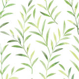 Floral seamless pattern. Leaves background. Nature ornament. Floral seamless pattern. Spring branch Leaves background. Nature ornamental texture with plant leaf Royalty Free Stock Photography