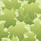 Floral seamless pattern. Leaves background. Nature ornamental te. Xture with maple plant  leaf Royalty Free Stock Photo