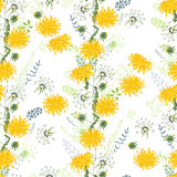 Floral seamless pattern made of yellow dandelions. Royalty Free Stock Photo