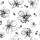 Floral seamless pattern with orchid flowers Royalty Free Stock Images