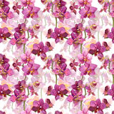 Floral seamless pattern with painted pink orchid flowers on white background Royalty Free Stock Images