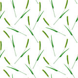 Floral seamless pattern with Phleum pratense. Timothy grass branches.image for fabric, paper and other printing and web projects.Watercolor hand drawn Royalty Free Stock Image