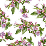 Floral seamless pattern with pink weigela Royalty Free Stock Photos
