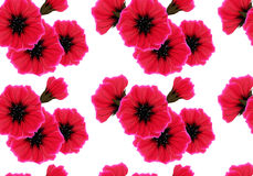 Floral seamless pattern with red flower and pink petal on white. Bright vivid color repeating passion background Royalty Free Stock Image