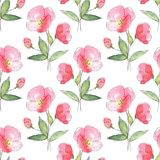 Floral seamless pattern. Red flowers. Hand drawn simple floral background Stock Photo