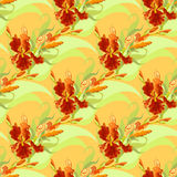 Floral seamless pattern. Red iris flower background. Royalty Free Stock Images