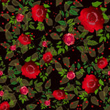 Floral seamless pattern rose Royalty Free Stock Images