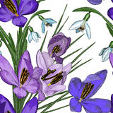 Floral seamless pattern with snowdrop and crocus flowers Stock Photos