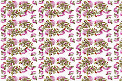 Floral seamless pattern - spring background. Cherry blossom spring backdrop - floral seamless pattern on a white background Royalty Free Stock Image