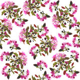 Floral seamless pattern - spring background. Cherry blossom spring backdrop - floral seamless pattern on a white background Stock Images