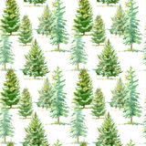 Floral seamless pattern of a spruce tree. Watercolor hand drawn illustration.White background Stock Image