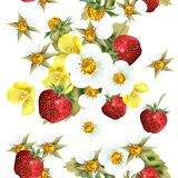Floral seamless pattern with strawberry berries and flowers Stock Image