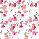 Floral seamless pattern with stylized sweet peas. Stock Photos