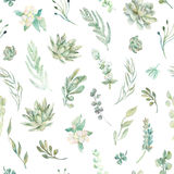 Floral seamless pattern. Succulents, ferns, thorns Royalty Free Stock Photography