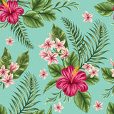 Floral seamless pattern. Tropical floral seamless pattern with plumeria and hibiscus flowers Royalty Free Stock Image