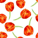 Floral seamless pattern with Tulips. Watercolor Royalty Free Stock Images