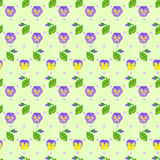 Floral  seamless pattern with Viola Royalty Free Stock Images