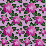 Floral seamless pattern with violet flowers. Stock Photos
